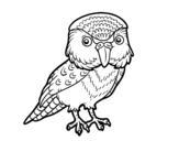 Dibuix de Kakapo per pintar