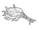 Dibuix de Manat d'espinacs per pintar