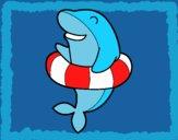 Dofí amb flotador